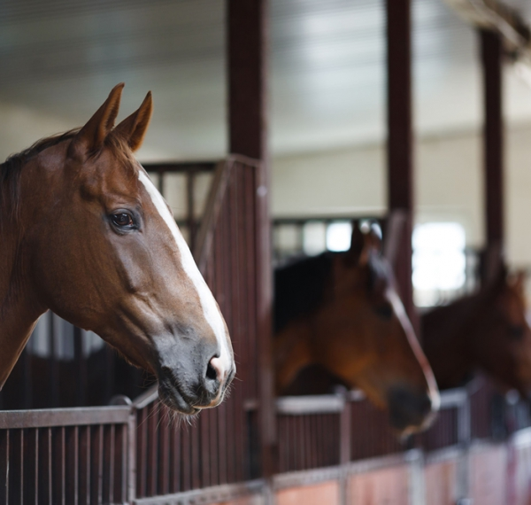 Horseracing Integrity Act to nix equine enhancing drugs